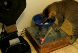 Monkey_the_Cat_Hunts_for_Dinner_-_YouTube_2015-08-07_10-09-12-296911433c346679
