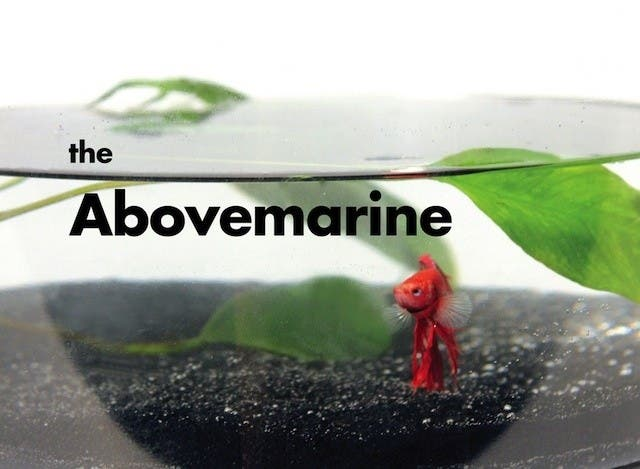 Abovemarine-Jose